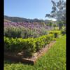 Garden Edging in 6mm Corten Steel 100mm High